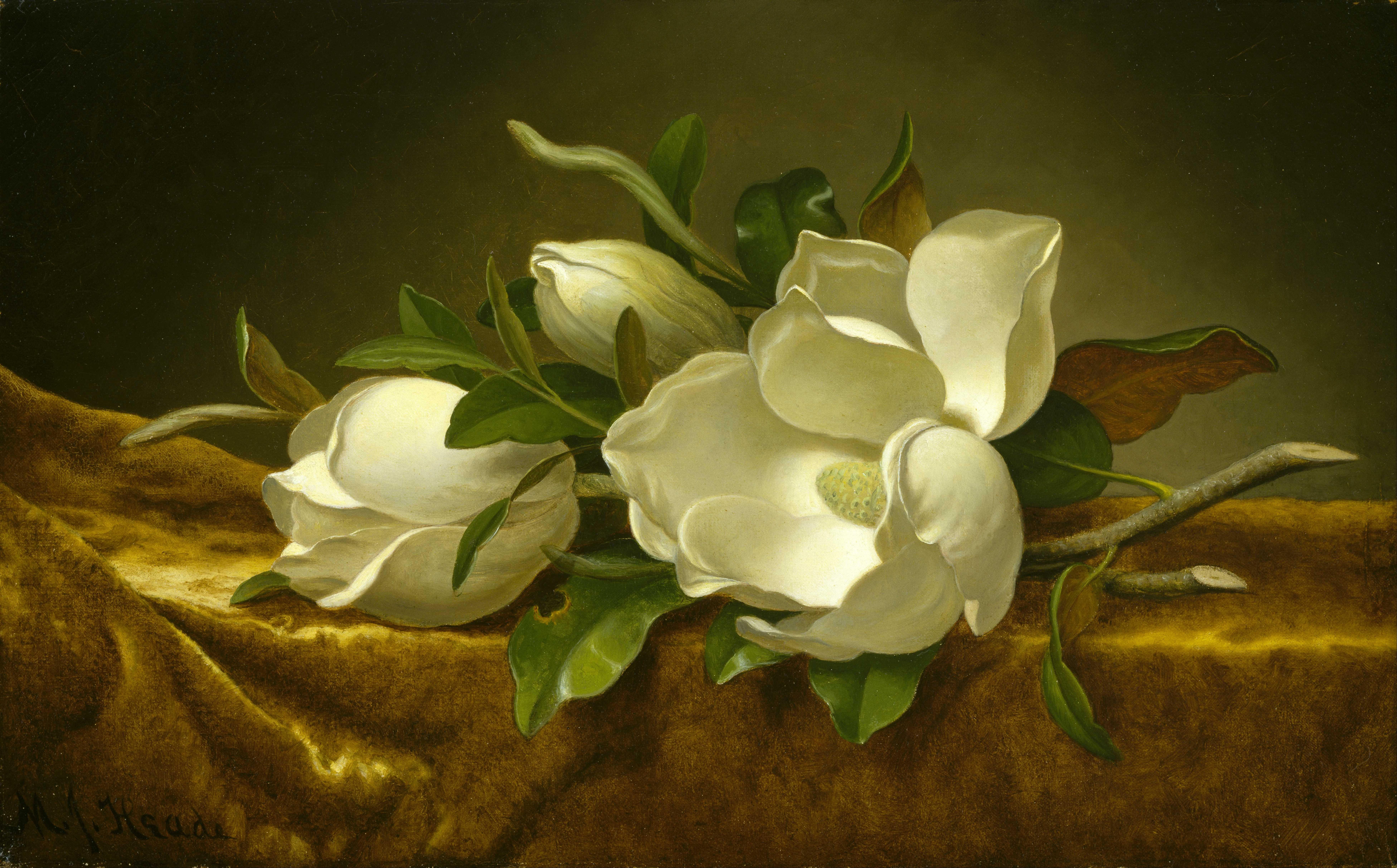 magnolia painting - photo #3