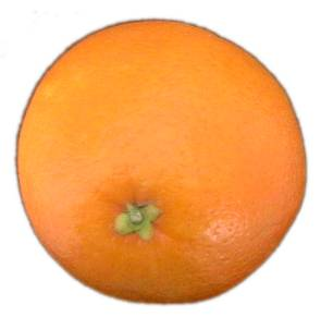 [Image: Orange-fruit-2.jpg]