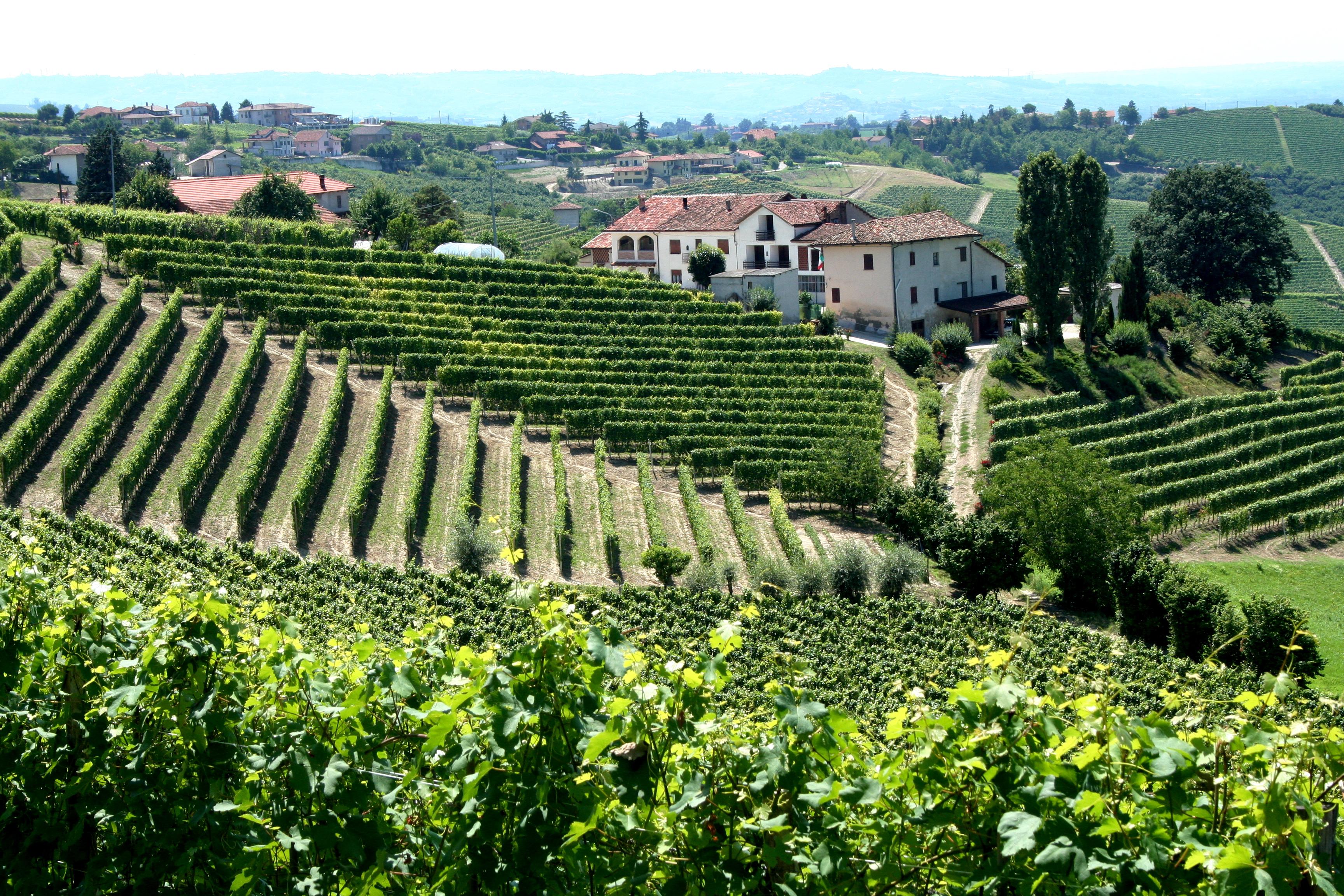 Best Wine Destinations In Italy Carmen Edelson Luxury