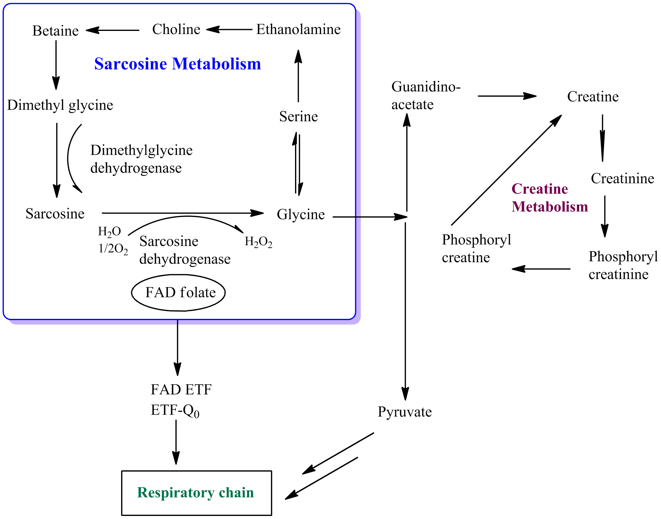 cellular respiration anabolic process