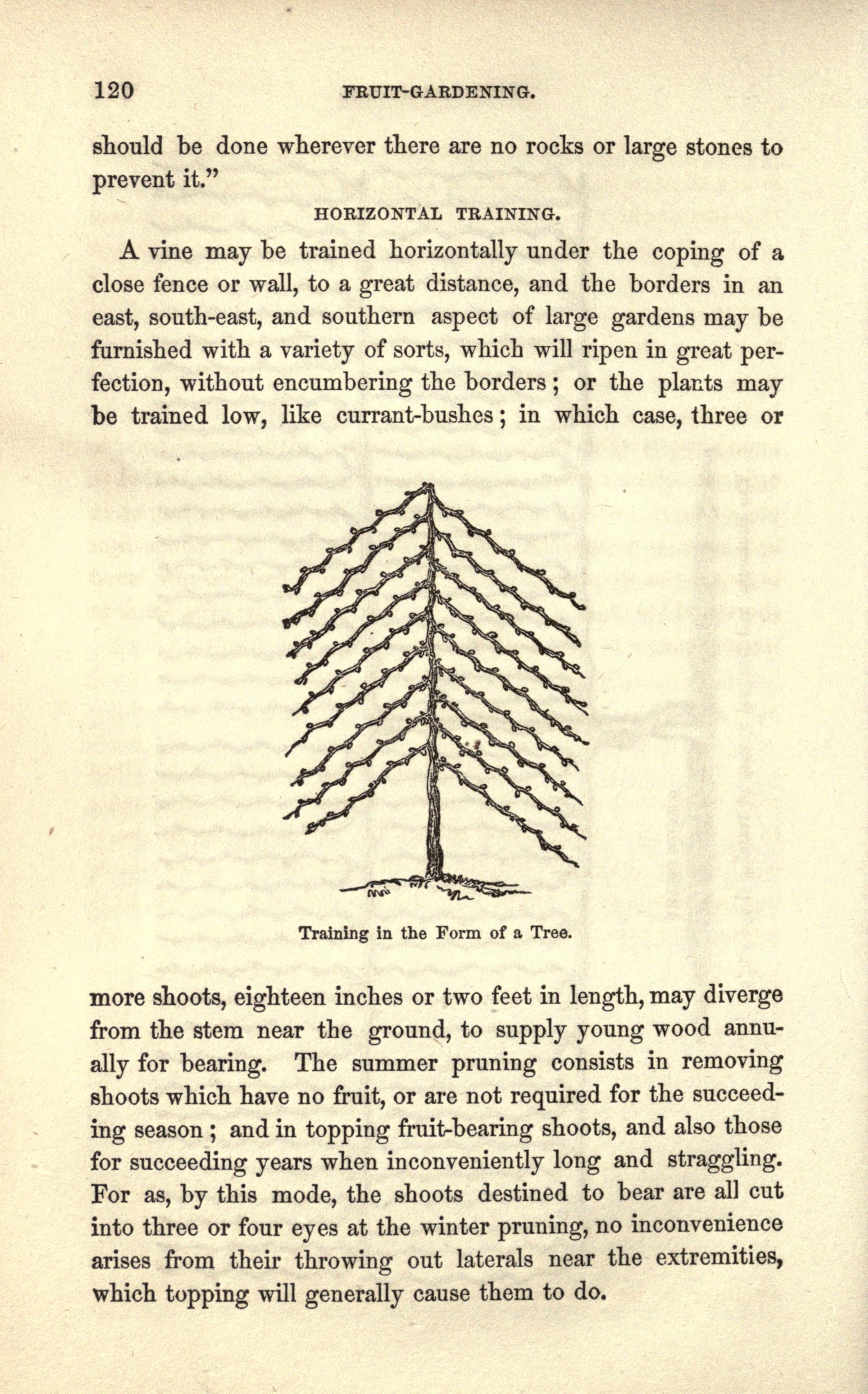 File:The American gardener's istant (Page 120) BHL20142294.jpg ...
