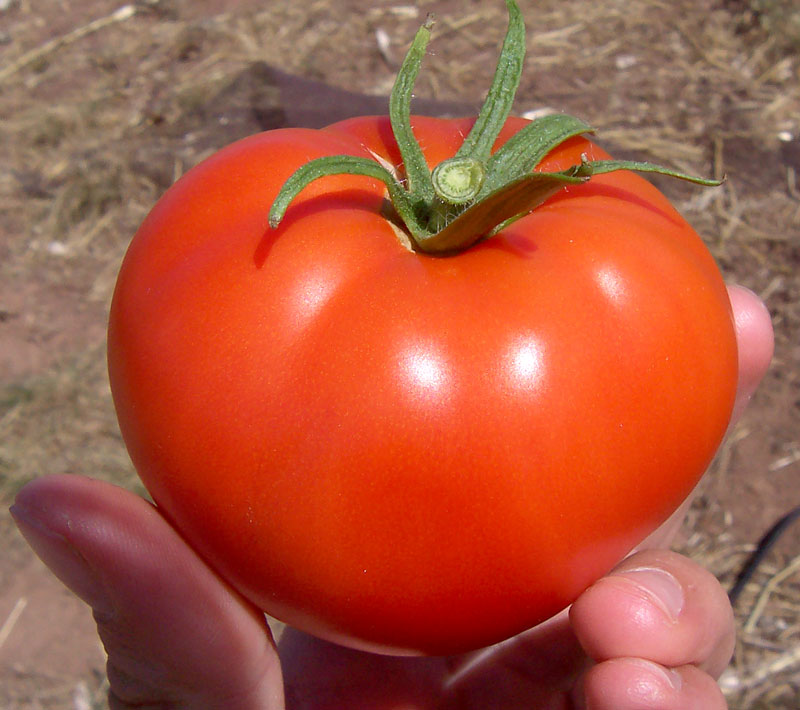 Tomato irritaes bladder