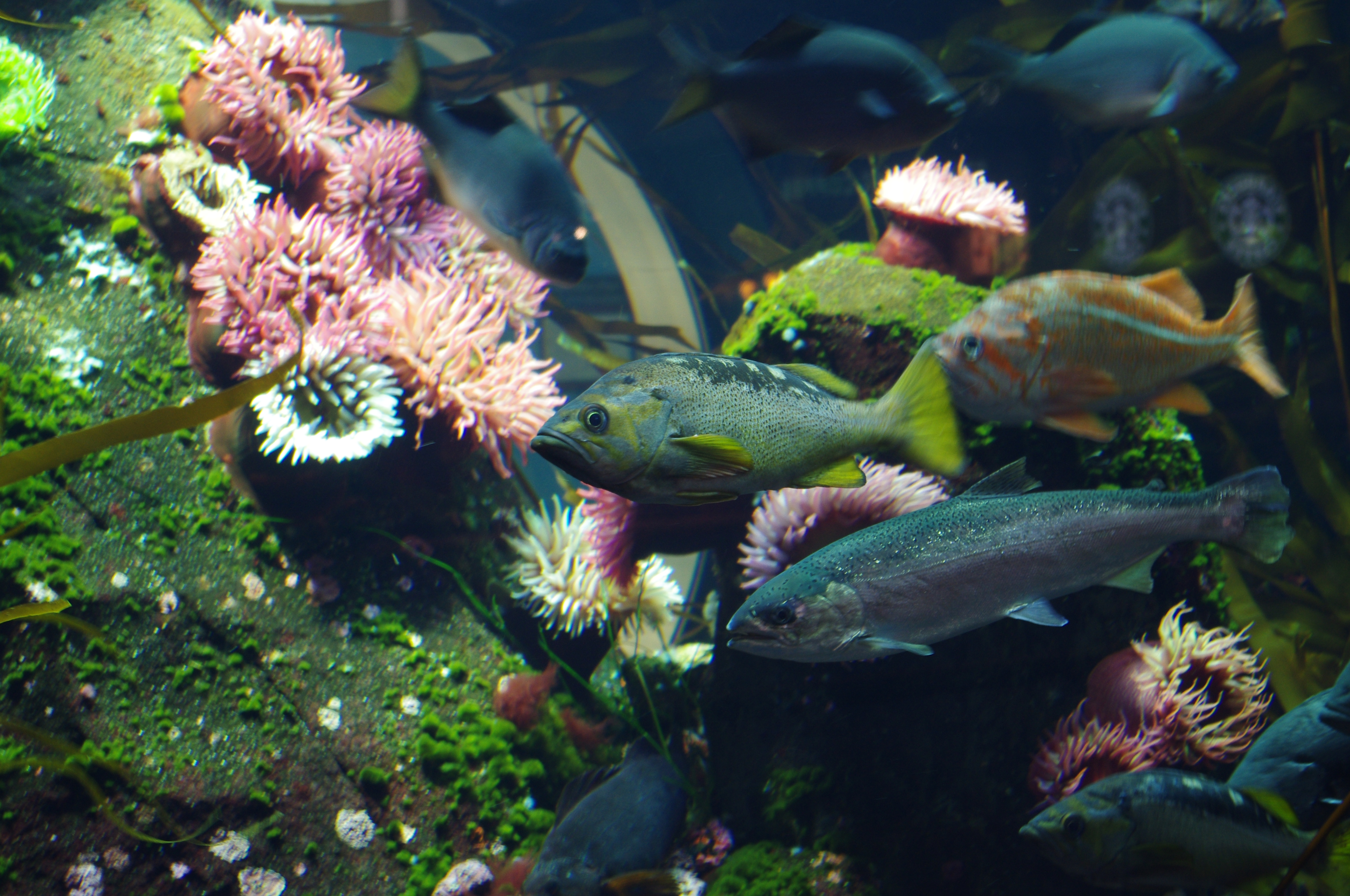 Freshwater aquarium fish vancouver - File Vancouver International Airport Aquarium 2 Jpg