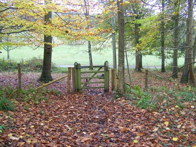 Woodland park, Dinton Park - geograph.org.uk - 1579040