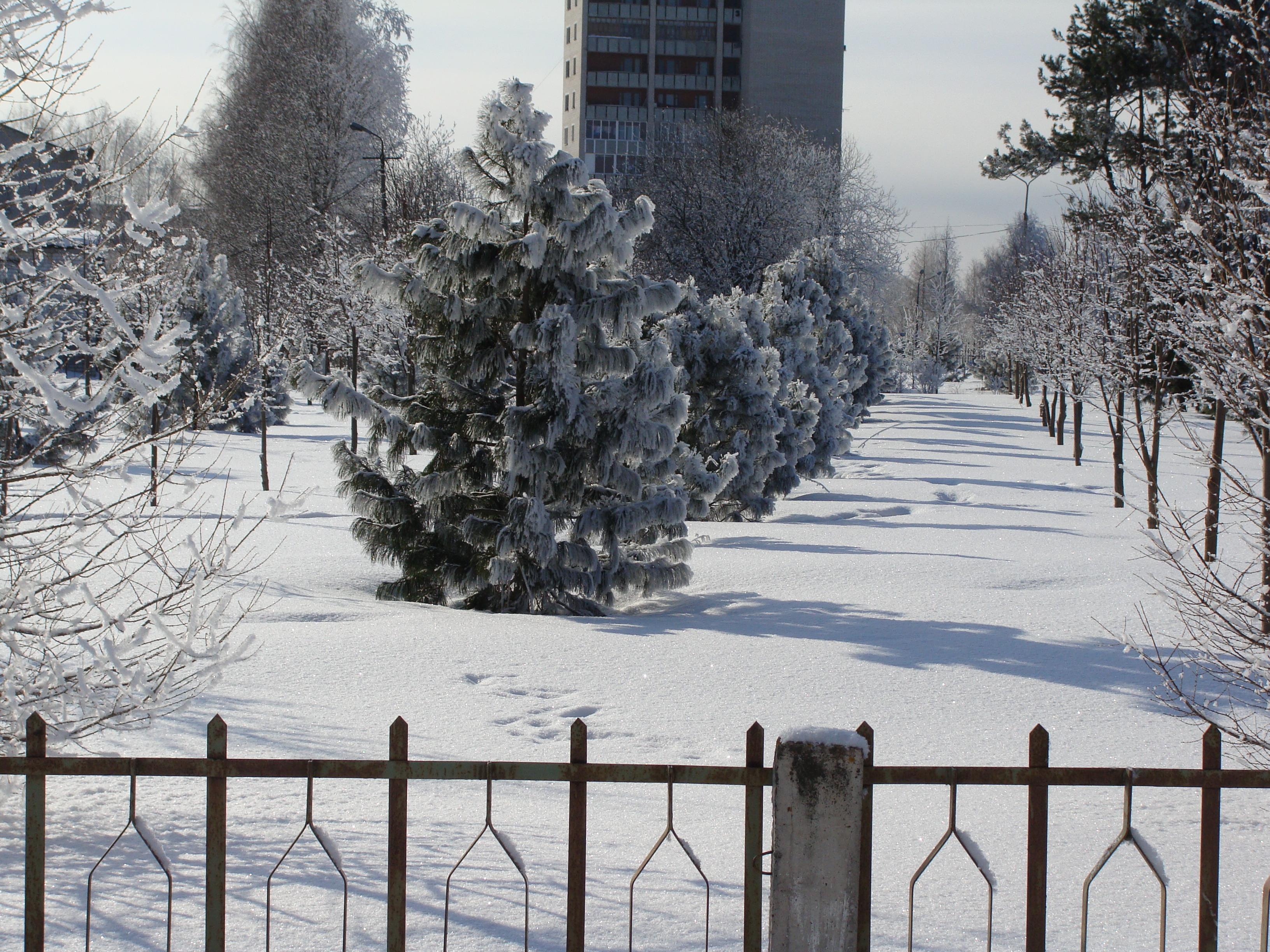 фото коряжмы зимой получилась весьма откровенной
