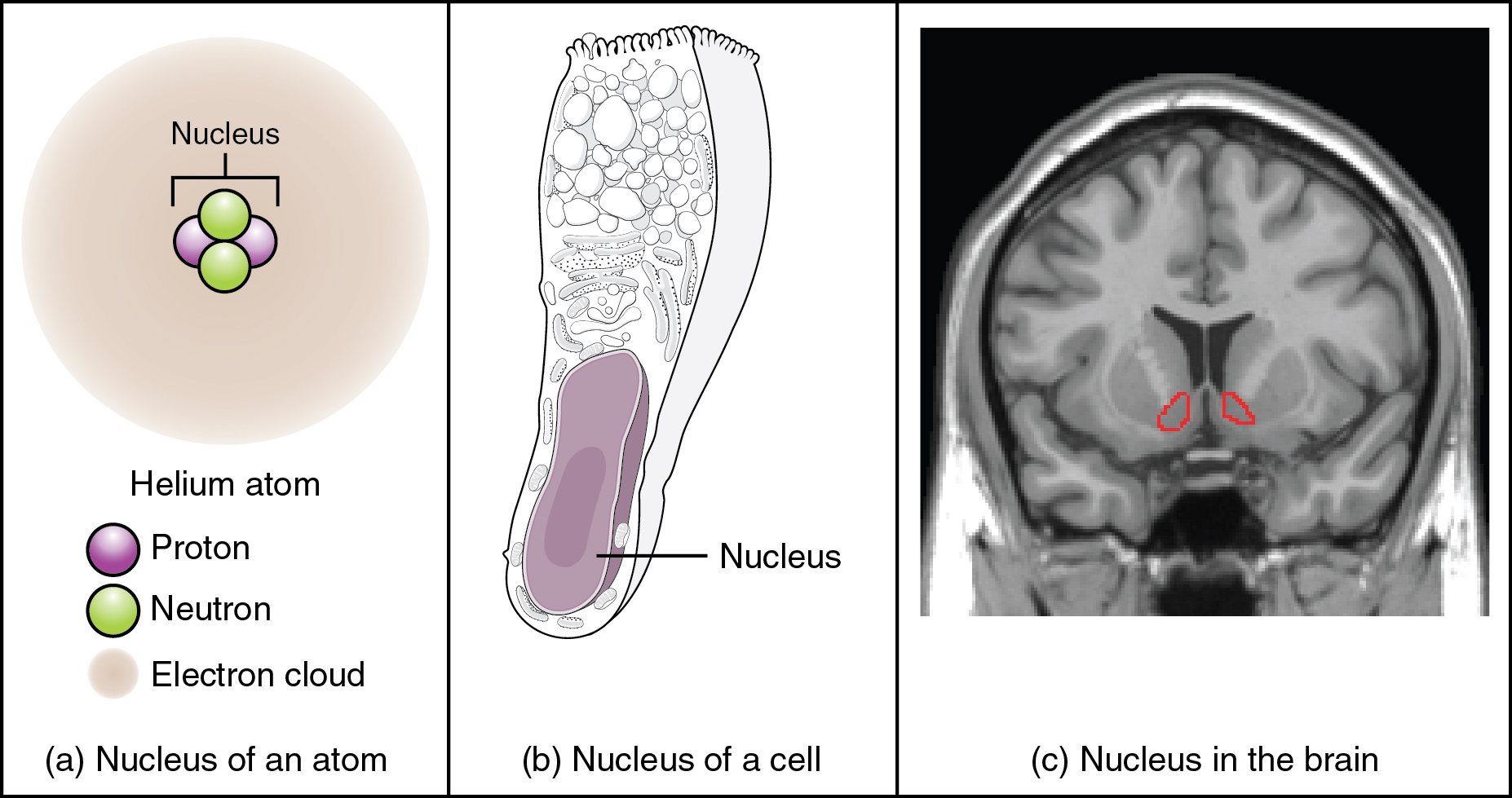 Nuclei - Definition