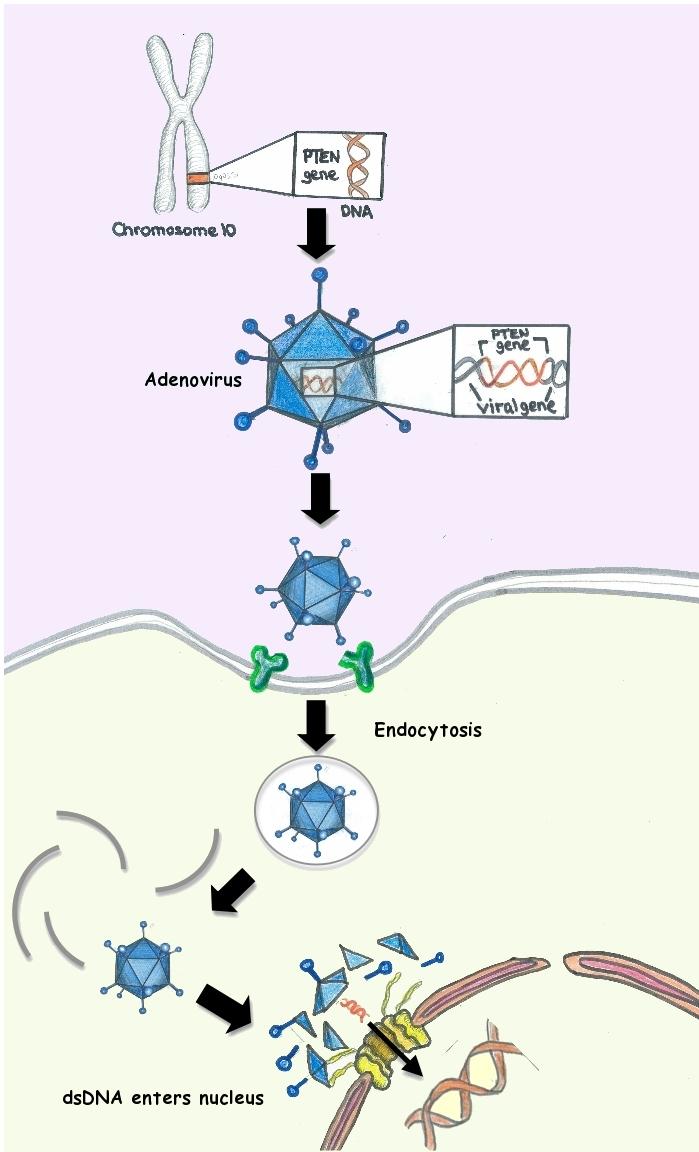 Nissan Santa Maria >> Gene Therapy Wikipedia | Autos Post