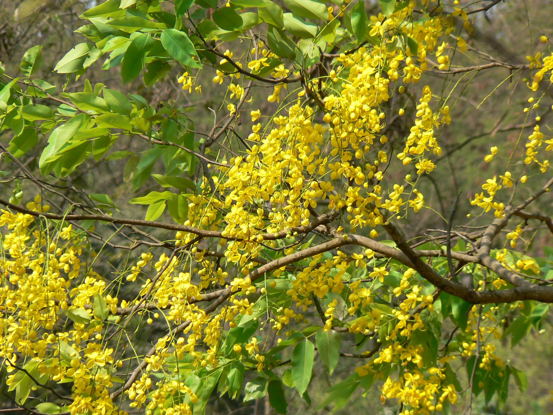 Konna Meaning Malayalam - 0425