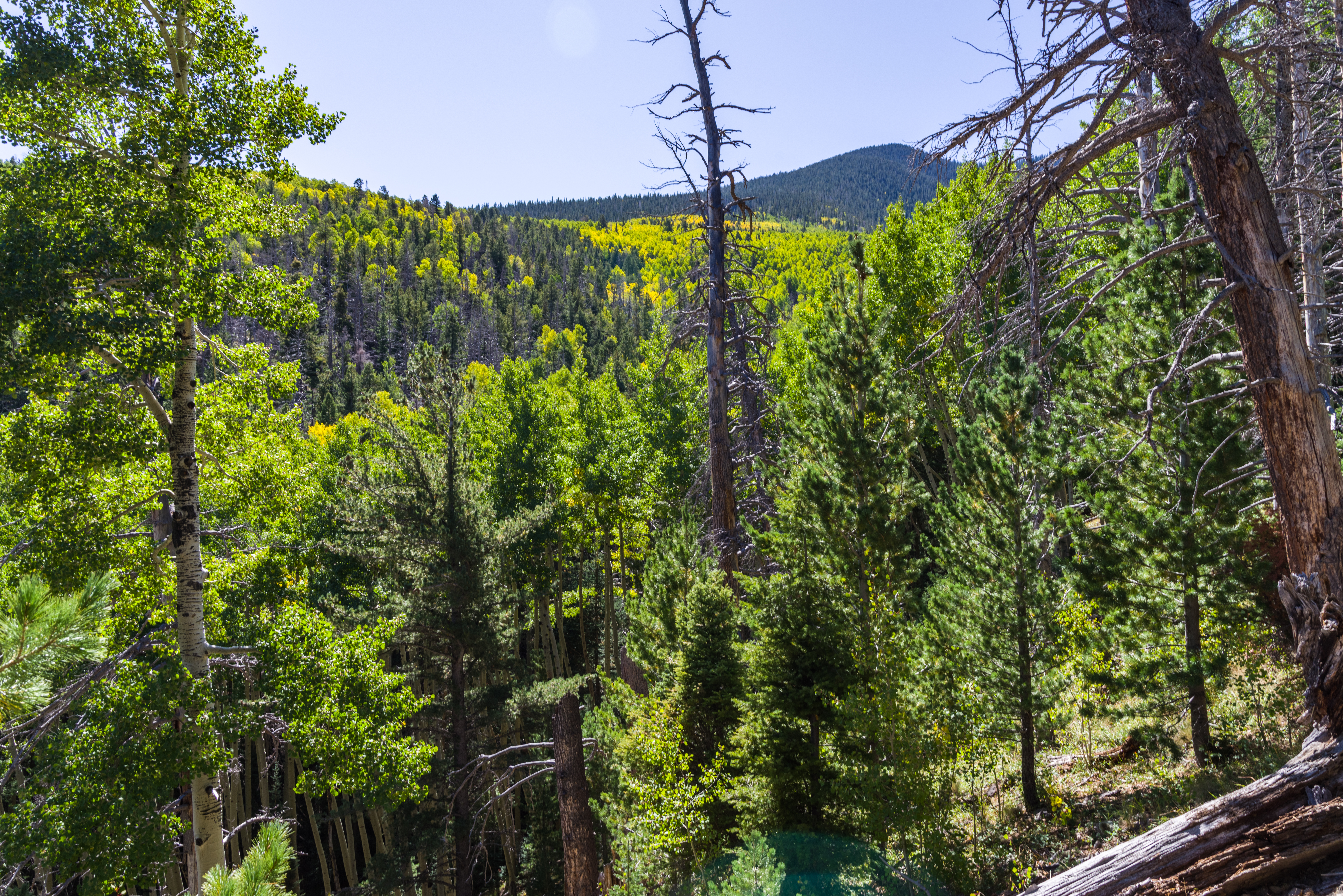 Bear Jaw Trail- Abineau-Bear Jaw Loop (37310492821).jpg