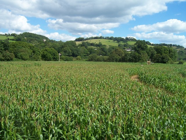 Bickleigh , The Maze of Maize - geograph.org.uk - 1224827