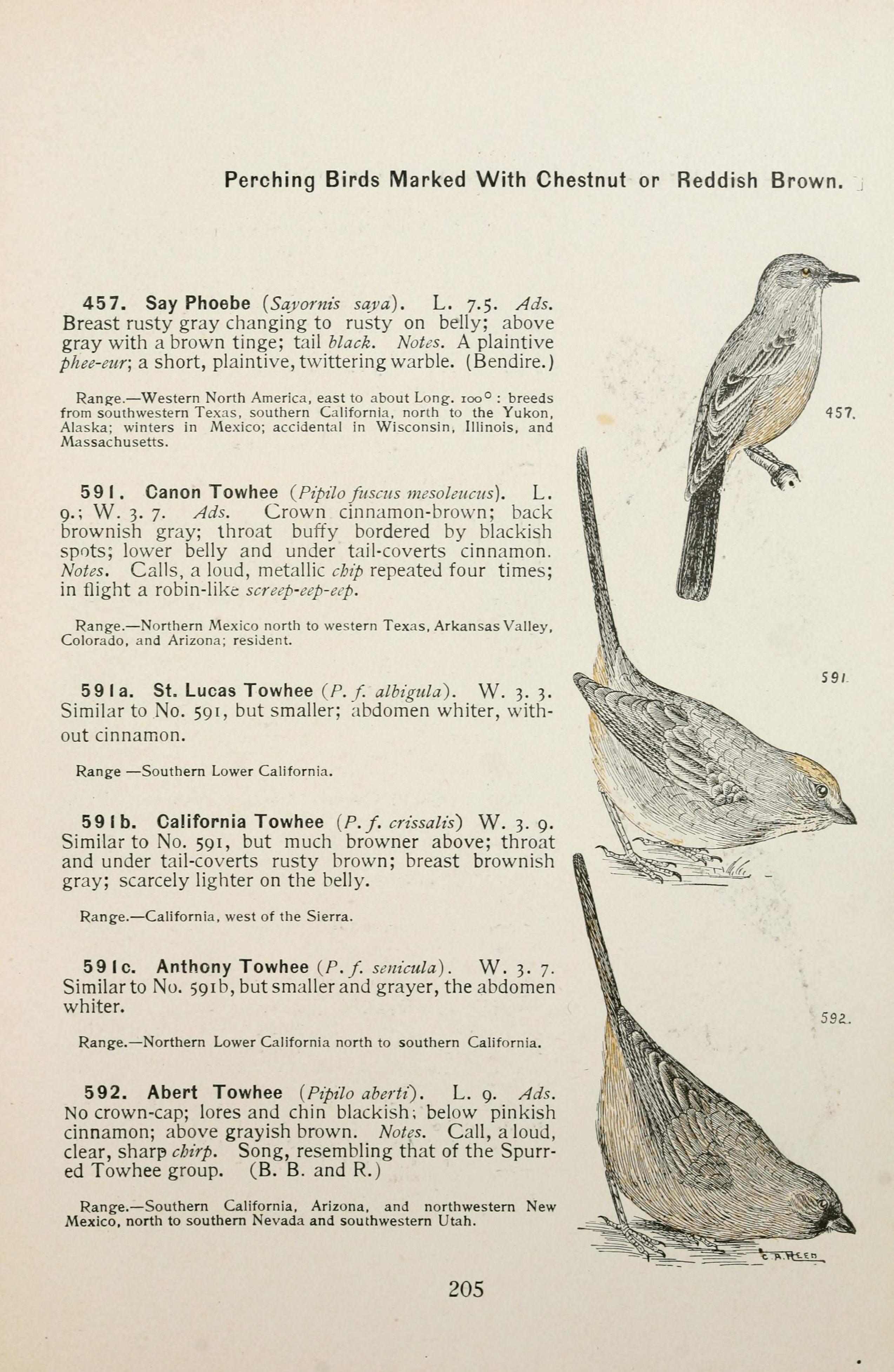 File:Color key to North American birds (Page 205) BHL7583829 jpg