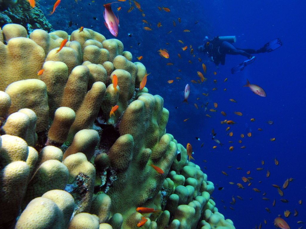File:Coral, fish and one diver (6165872709).jpg ...