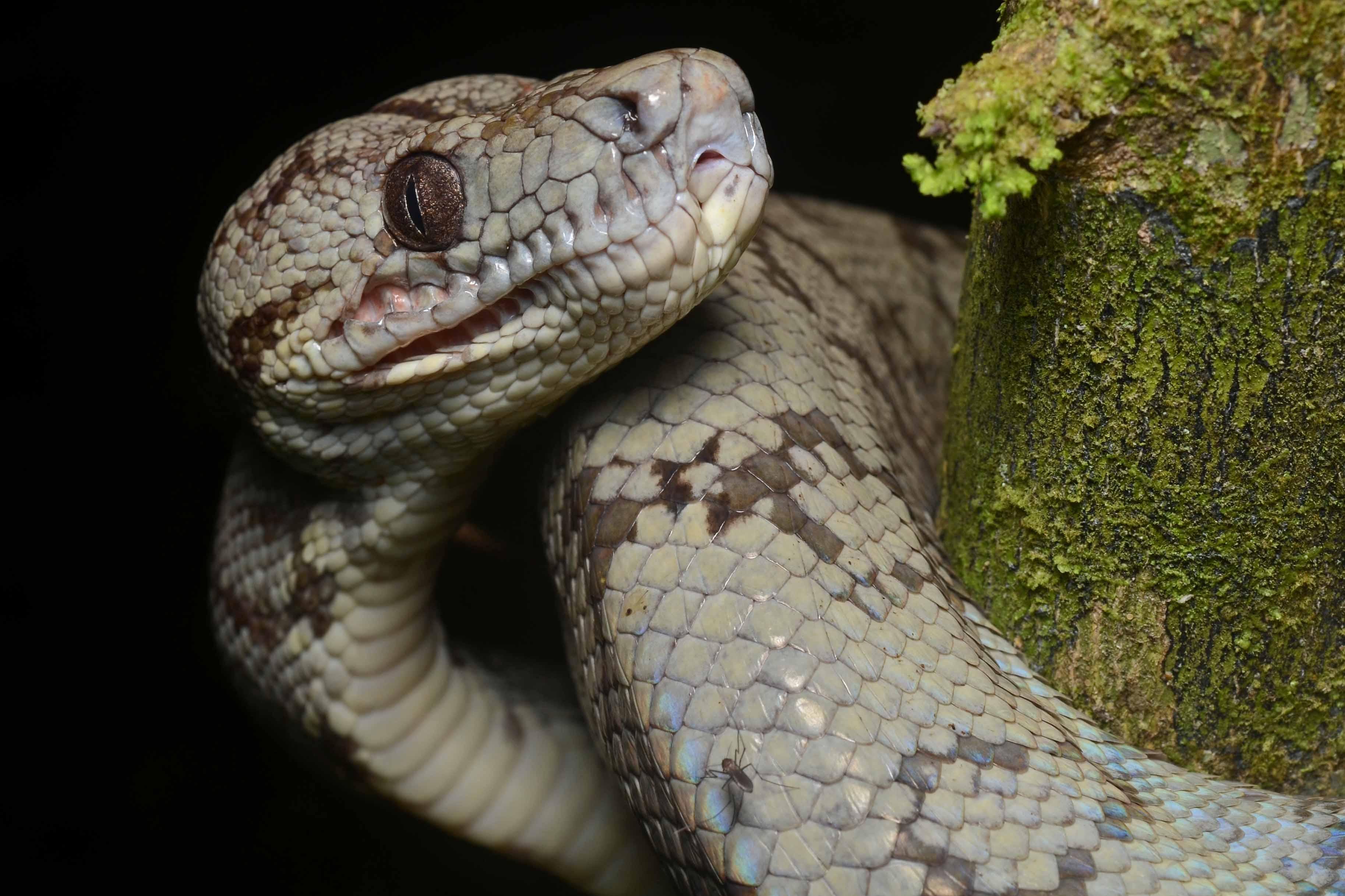 Wholesale Reptiles for Sale  Wholesale Reptiles for Sale