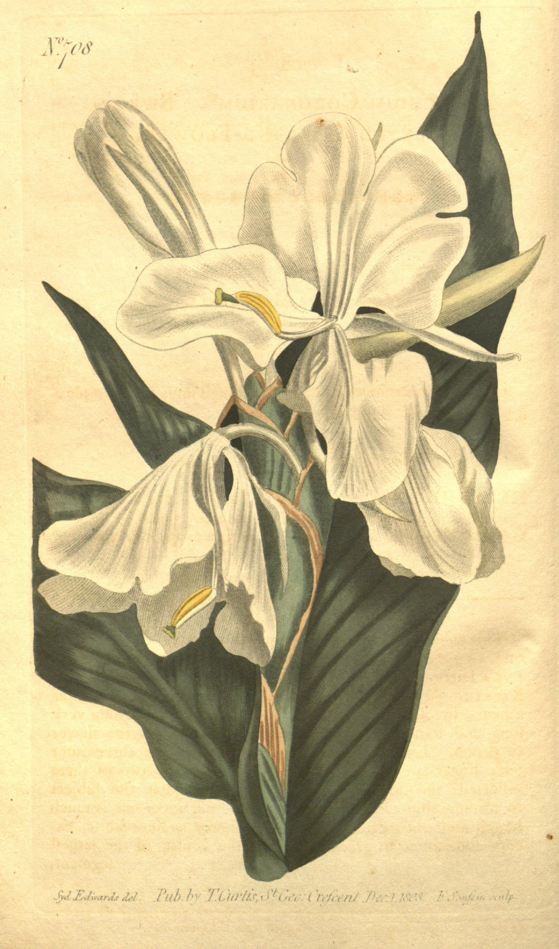 White Lotus Aromatics