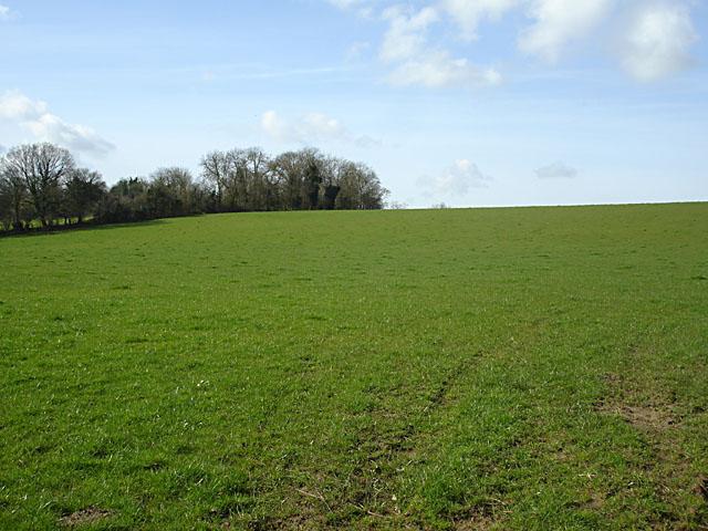 File:Field opposite Gloucester Road Farm - geograph.org.uk - 357975.jpg