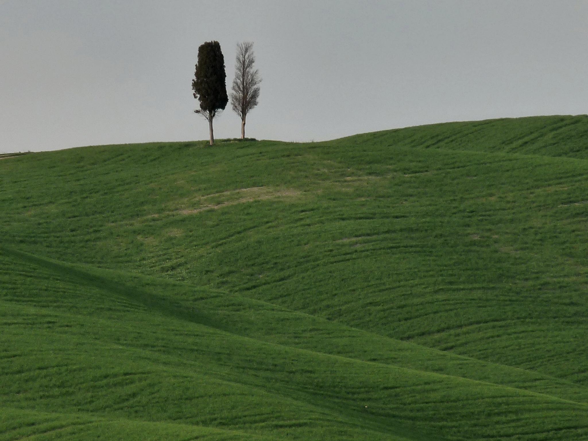 Flickr - lo.tangelini - Un viejo amigo.jpg