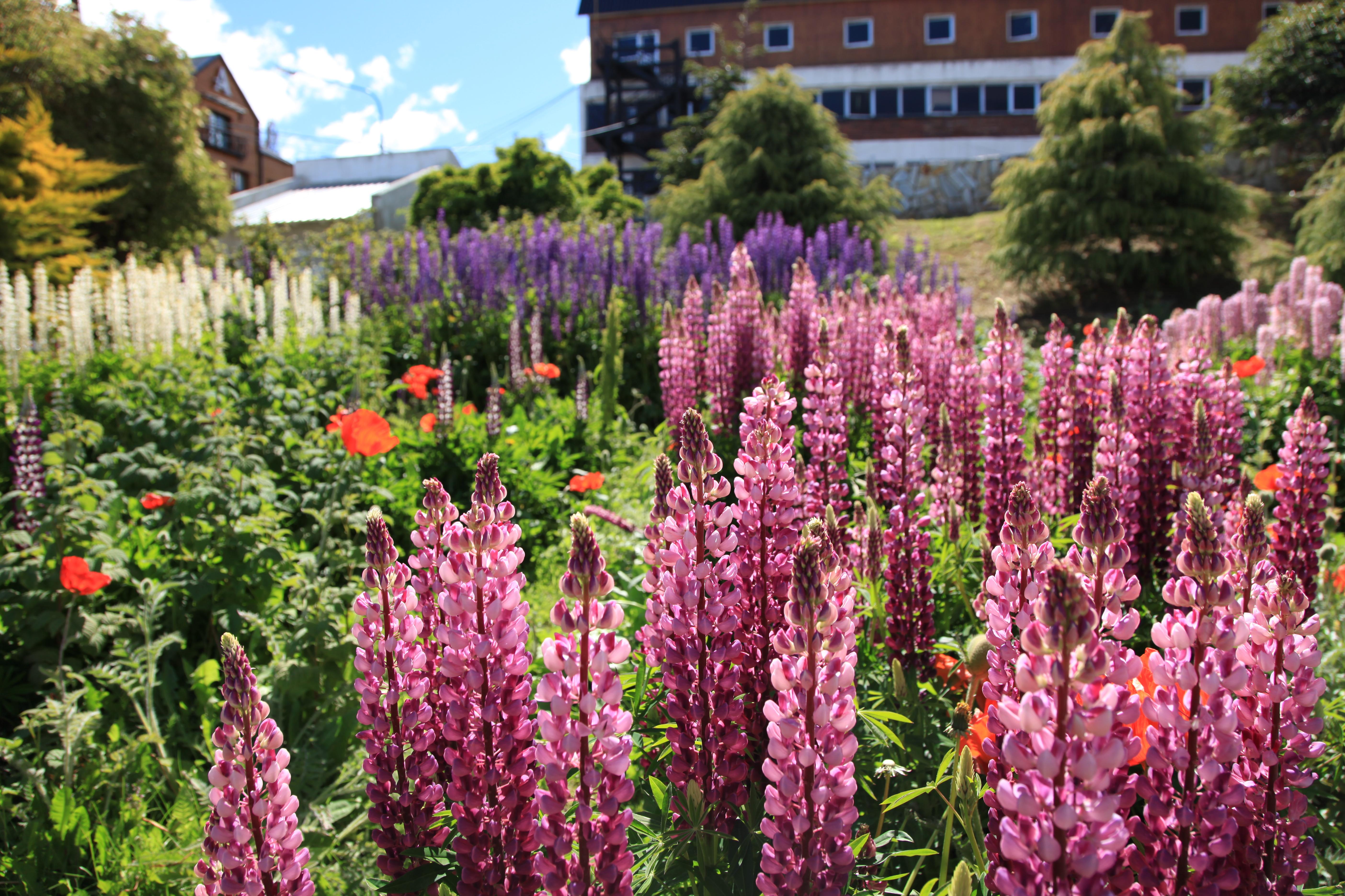 descriptive essay of a flower garden