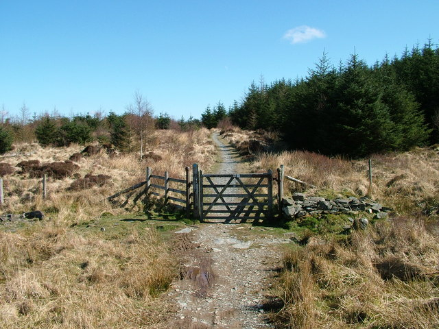 Gate into the forest - geograph.org.uk - 1232645
