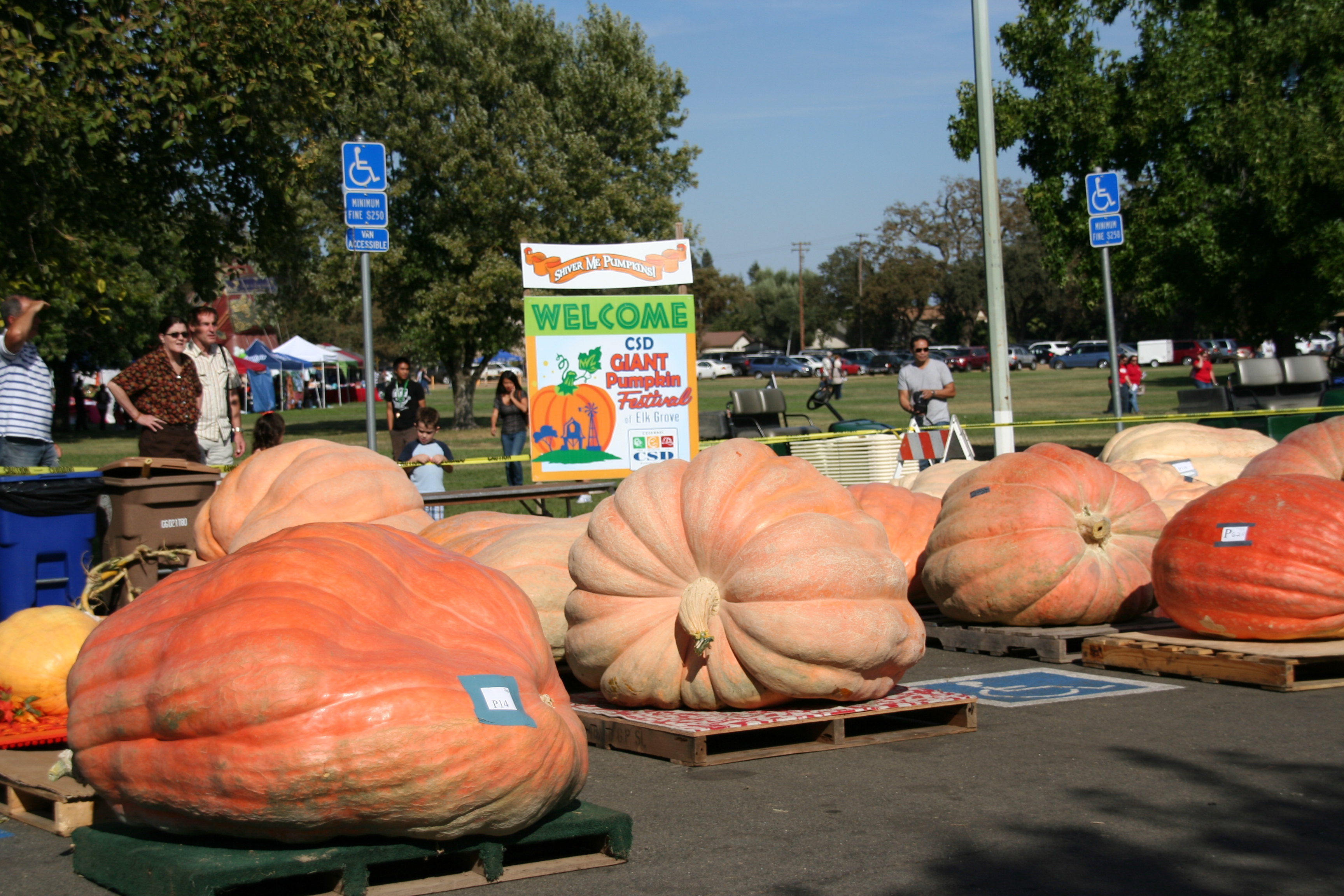 Image result for giant pumpkin