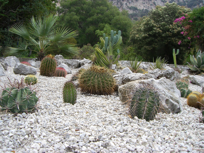 File:Gibraltar Botanic Gardens, Cacti Bed