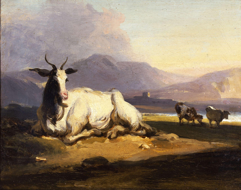 File:Goat in an Indian landscape jpg - Wikimedia Commons