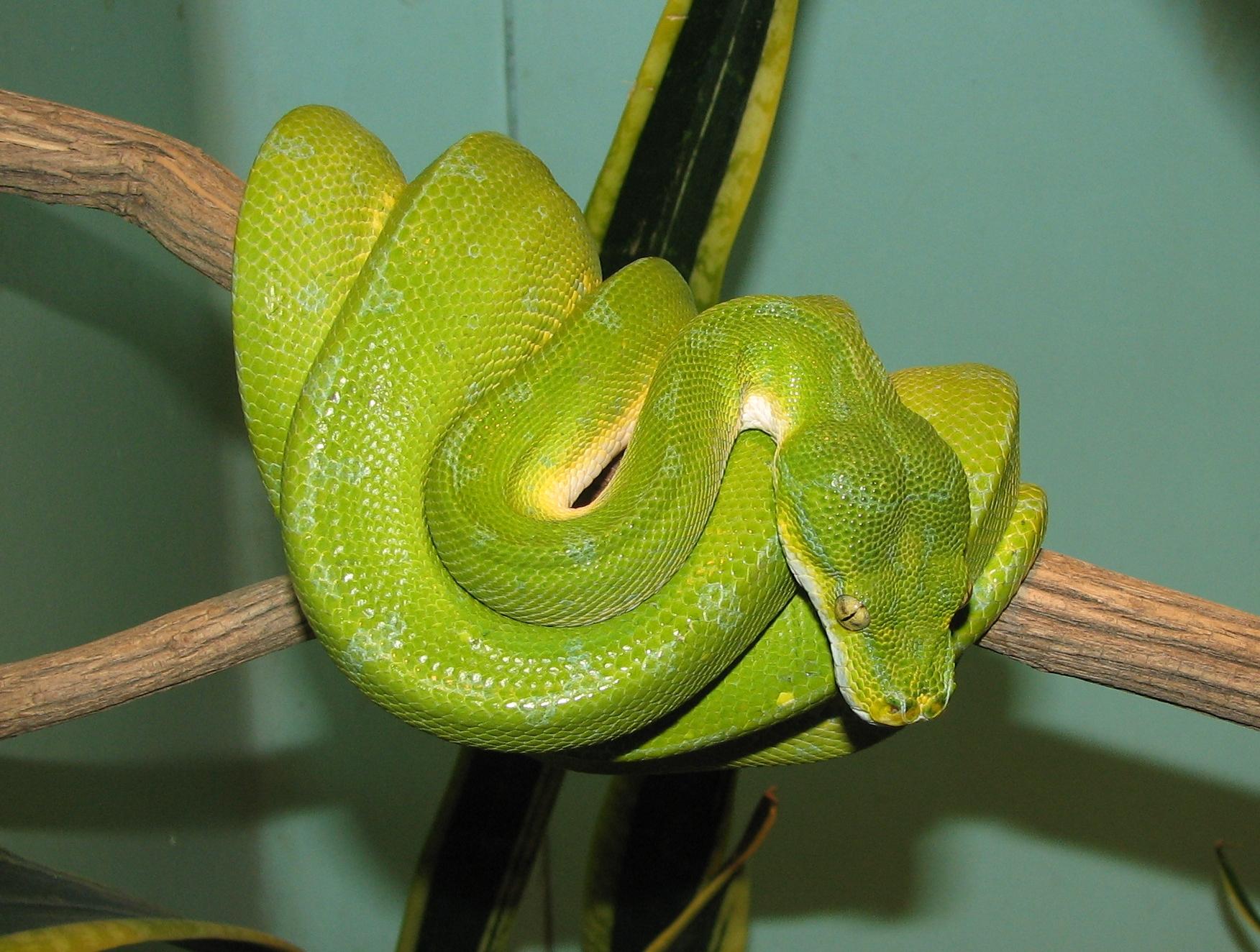 green tree snake pose