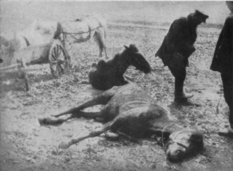 Collectivization - starving horses at the village fence of Kharkov in 1933.
