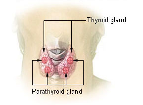 Above shows two parts of the thyroid that coul...