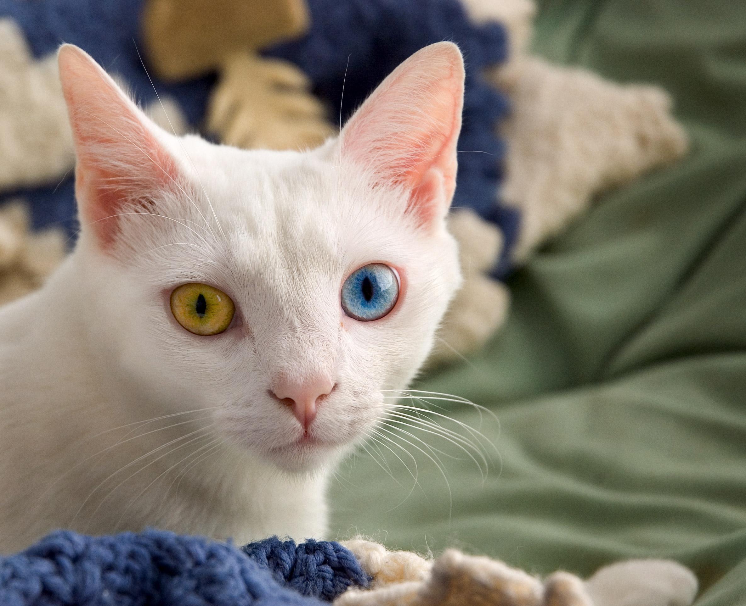 Znalezione obrazy dla zapytania cat pics