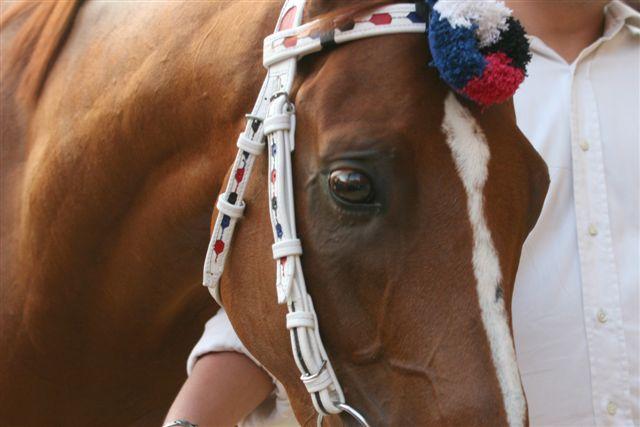 Il cavallo vittorioso dell'Istrice, Già del Menhir