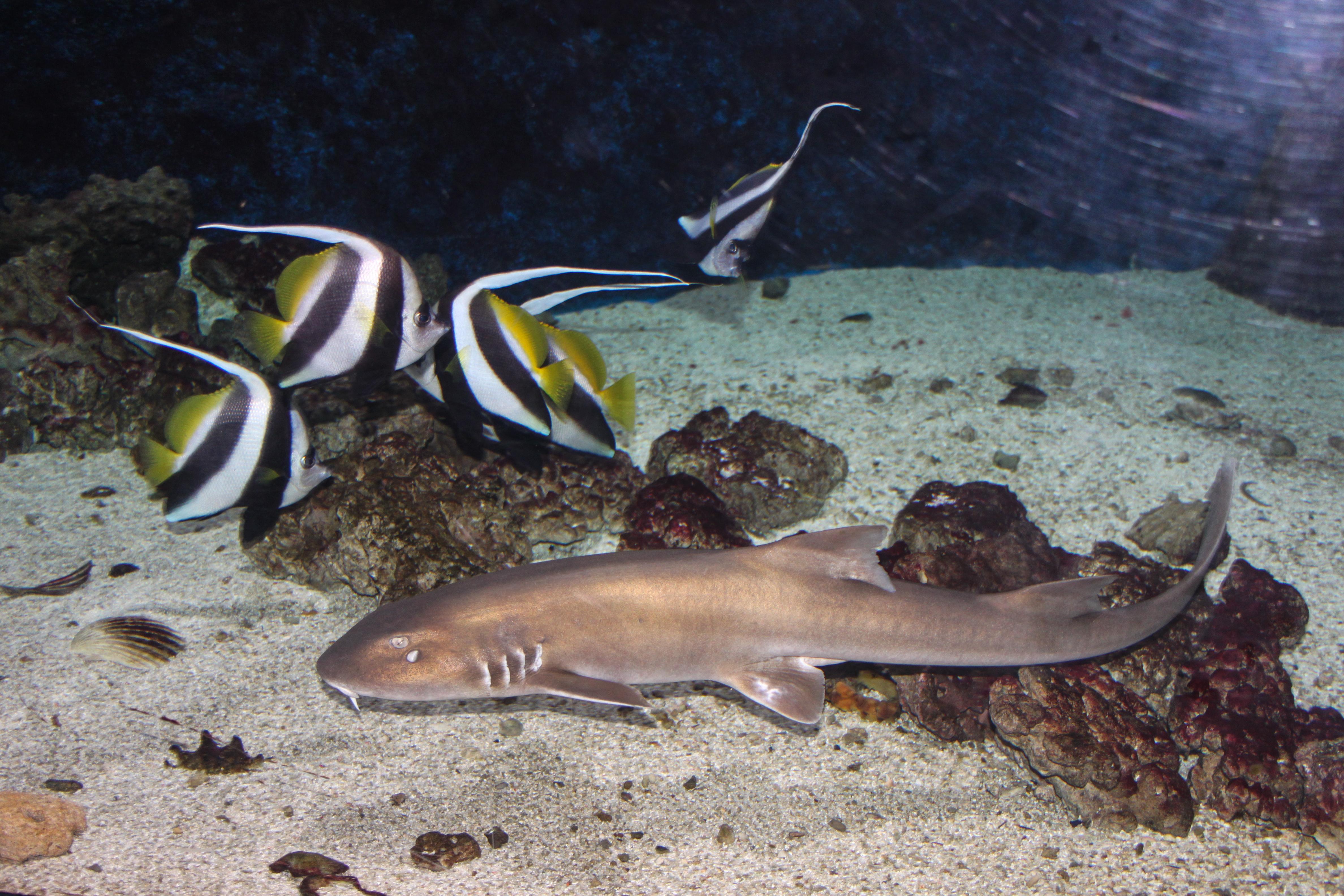 bamboo shark tank - photo #16