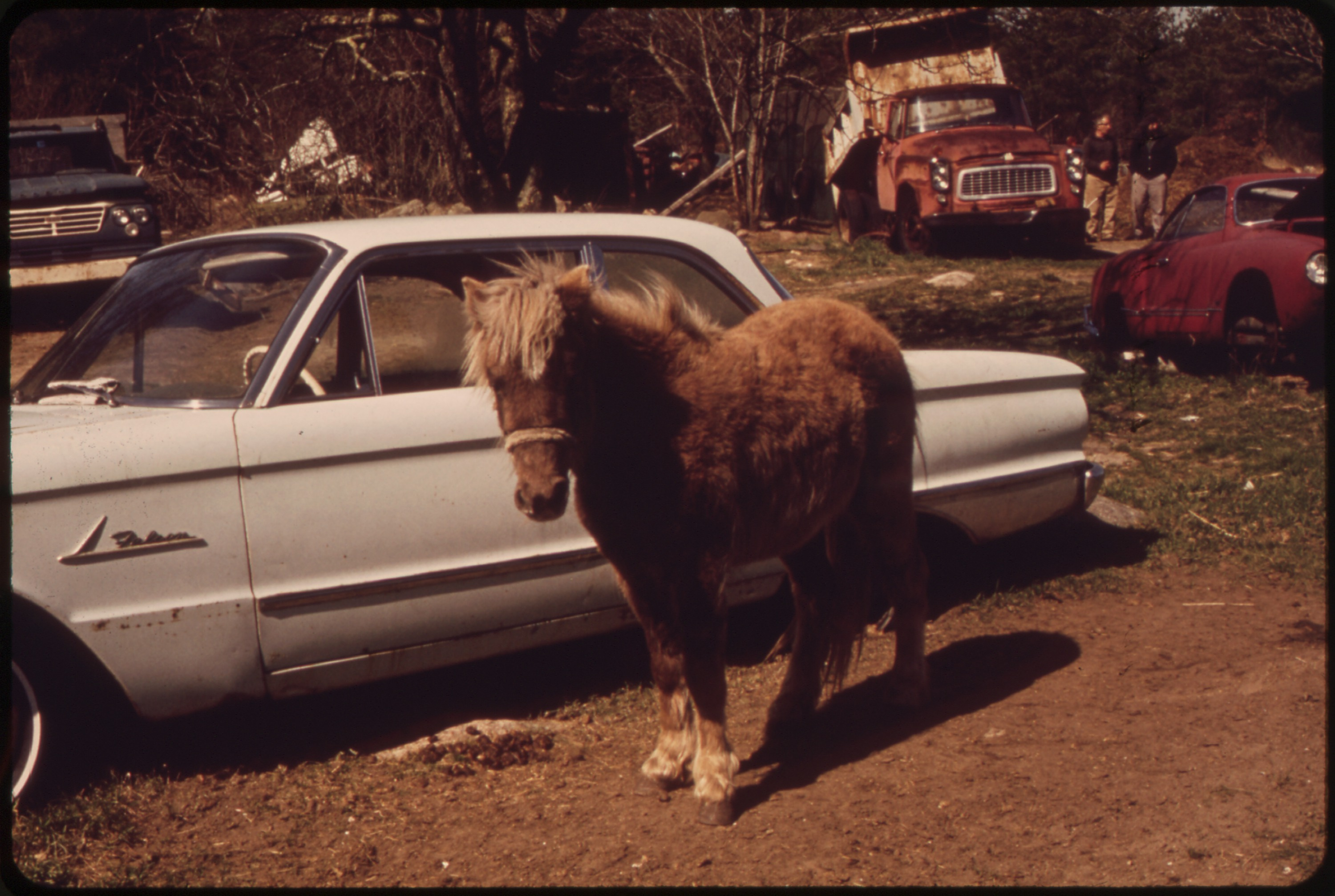 OBSOLESCENCE_IN_THE_JUNKYARD_-_PONY_OR_A