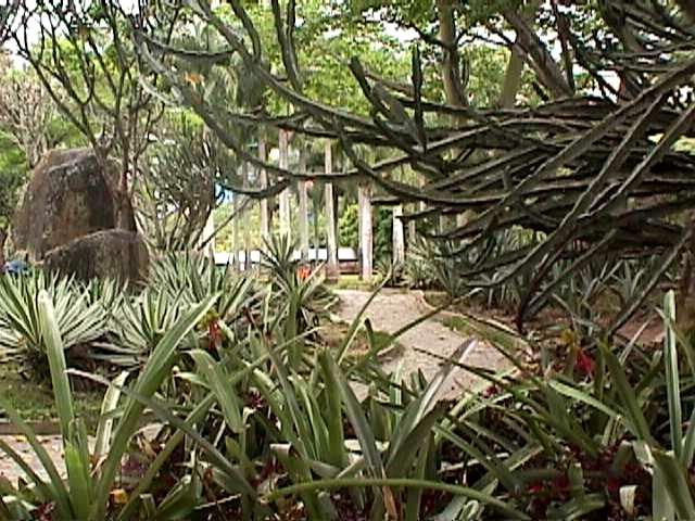 File parque del este jardin xerofito 2001 caracas for Cafres este jardin