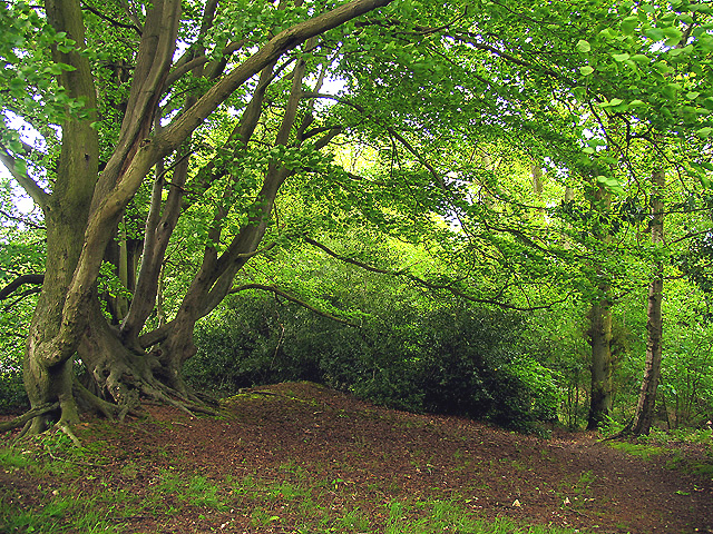 Ramsbury Wood on the edge of the fort - geograph.org.uk - 11760