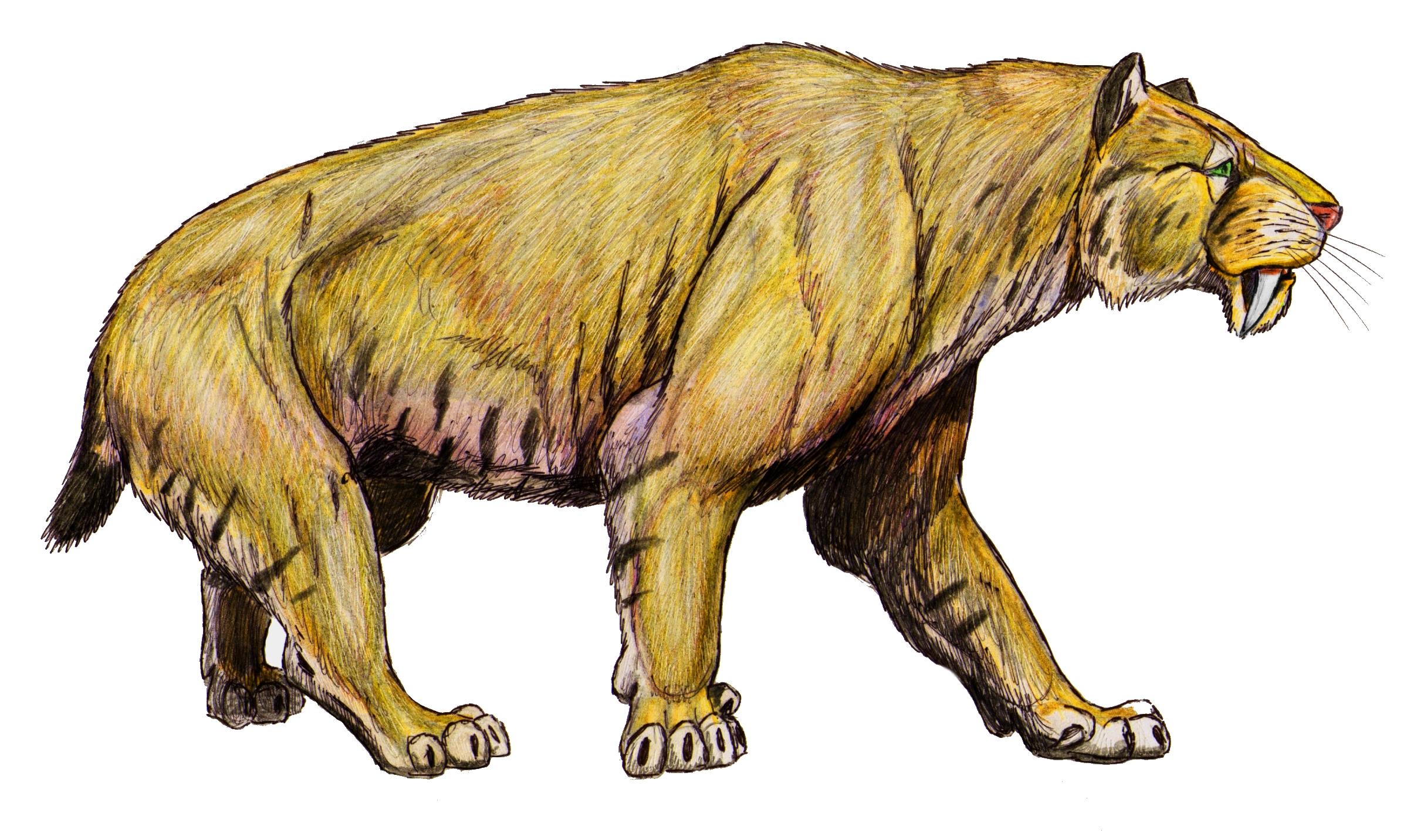 Smilodon Wikipedia