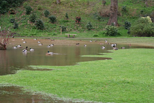 The Duck Pond, Mount Edgcumbe Park - geograph.org.uk - 348397