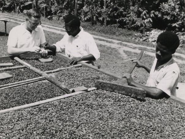Cocoa production in Ghana - Wikipedia