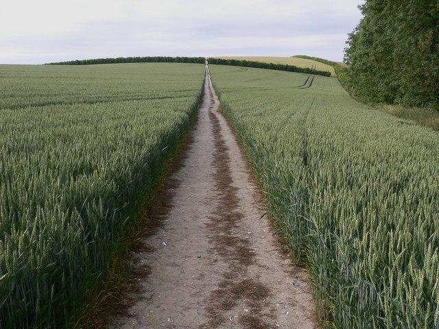 The Staunton Way on Chalton Down - geograph.org.uk - 1923513