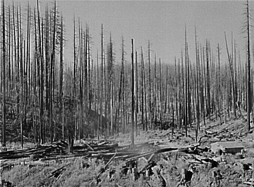 ティラムックの大火