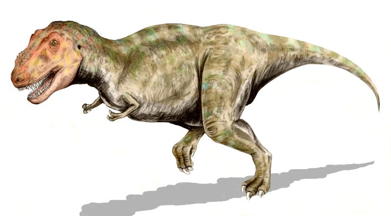File:Tyrannosaurus BW.jpg