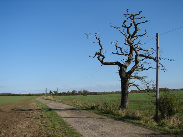 File:Withered Tree near Track to Fen Farm - geograph.org ...