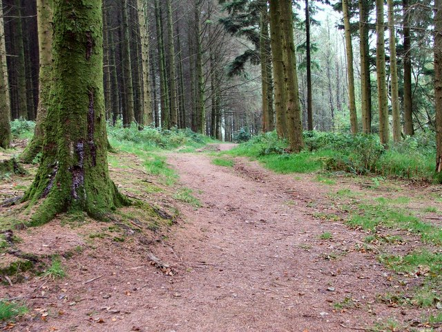 Woodland at Wistlandpound Reservoir - geograph.org.uk - 1498654