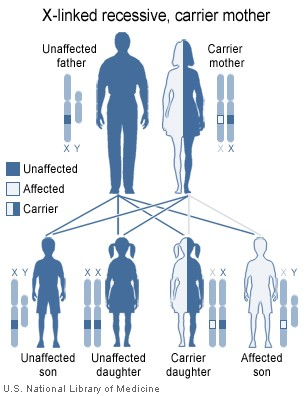 X-linked recessive inheritance - Wikipedia, the free encyclopedia