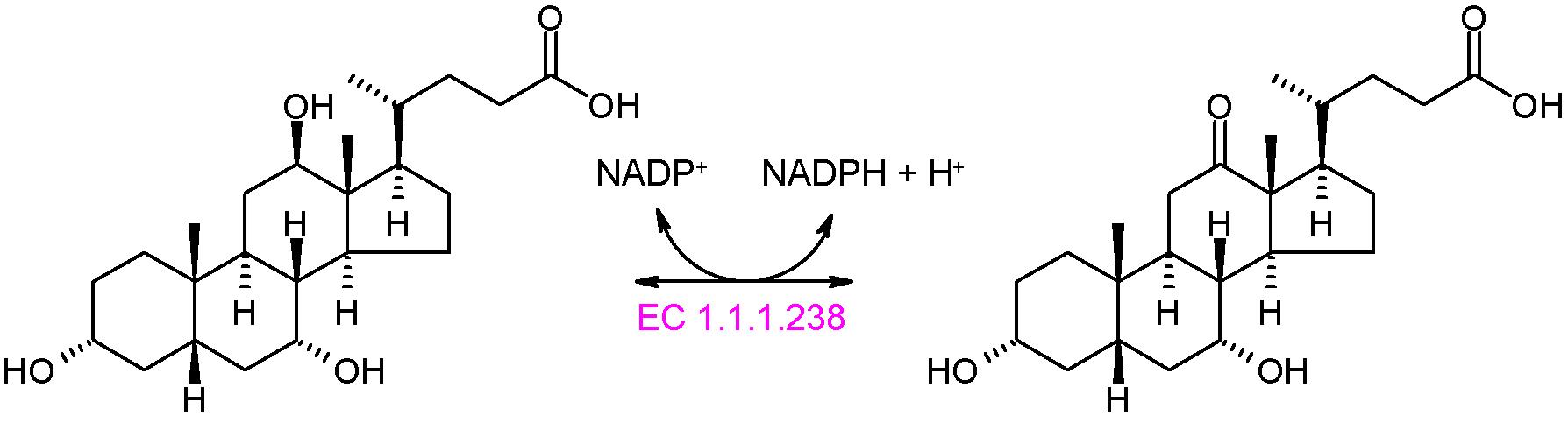 12beta-hydroxysteroid dehydrogenase