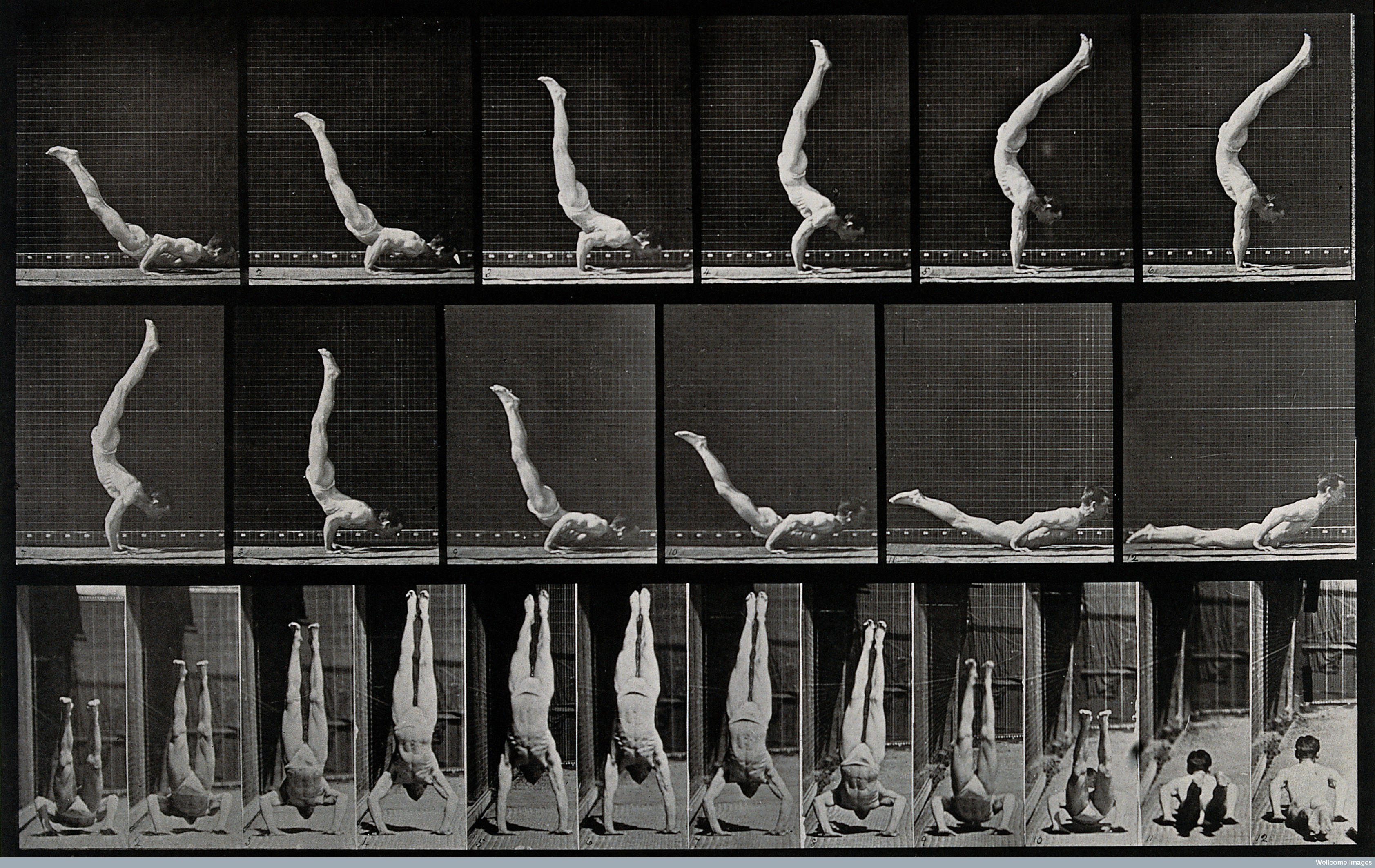 essay on eadweard muybridge One of the most innovative pioneers of photography, eadweard muybridge (1830-1904) is perhaps best known as the man who proved that a horse has all four hooves off.