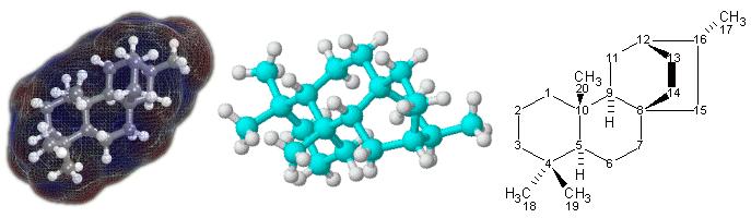 Figura 1. Representaciones de la terpenoide, atisano, 3D (centro izquierda) y 2D (derecha). En el modelo 3D de la izquierda, los átomos de carbono están representados por esferas azules; las blancas representan a los átomos de hidrógeno y los cilindros representan los enlaces. El modelo es una representación de la superficies molecular, coloreada por áreas de carga eléctrica positiva (rojo) o negativa (azul). En el modelo 3D del centro, las esferas azul claro representan átomos de carbono, las blancas de hidrógeno y los cilindros entre los átomos son los enlaces simples.