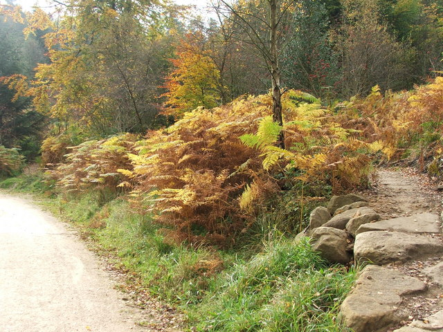Autumn ferns in Dalby Forest - geograph.org.uk - 1561544