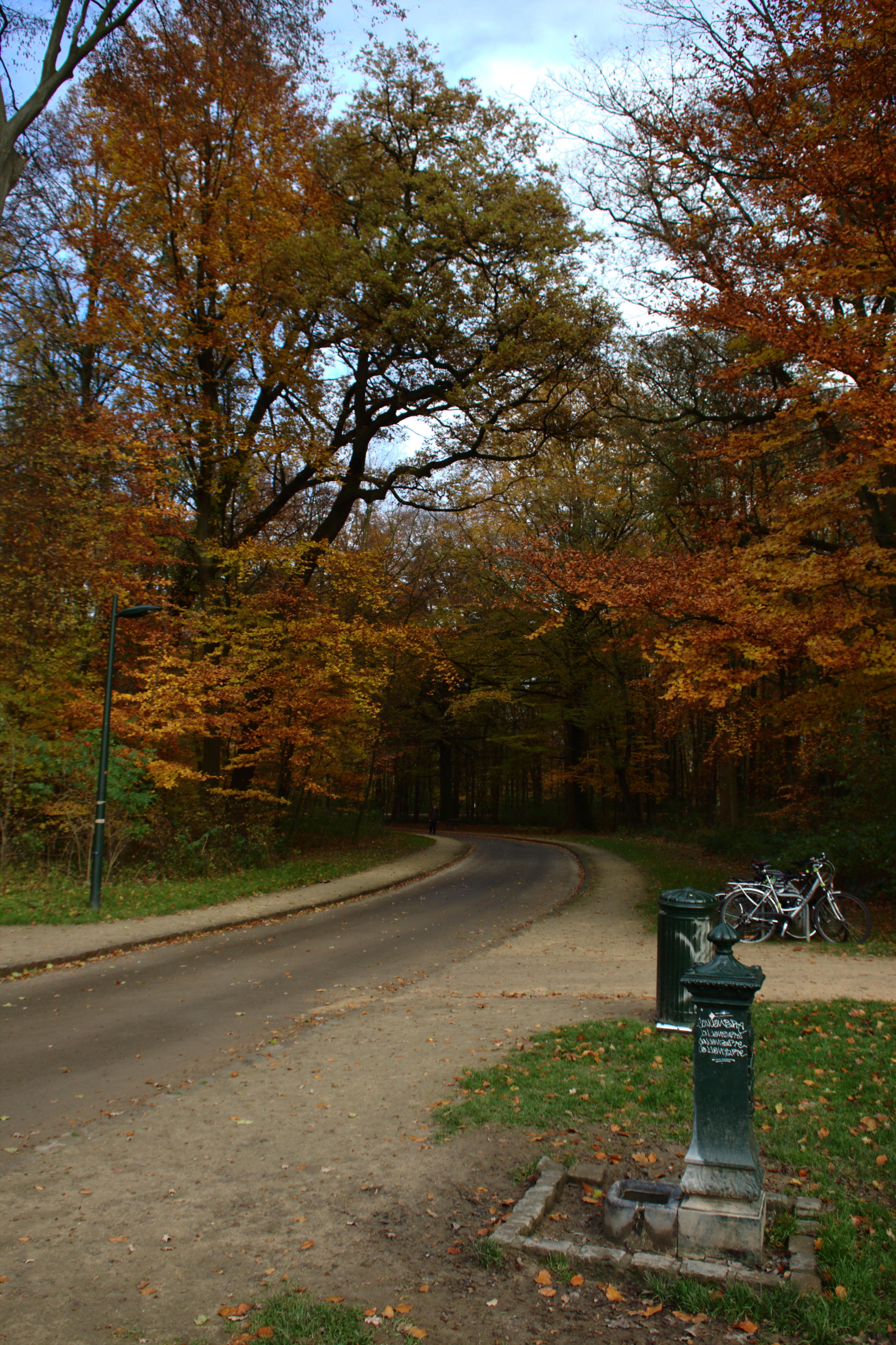 File brusel bois de la cambre cesta wikimedia for Bois de la chambre bruxelles