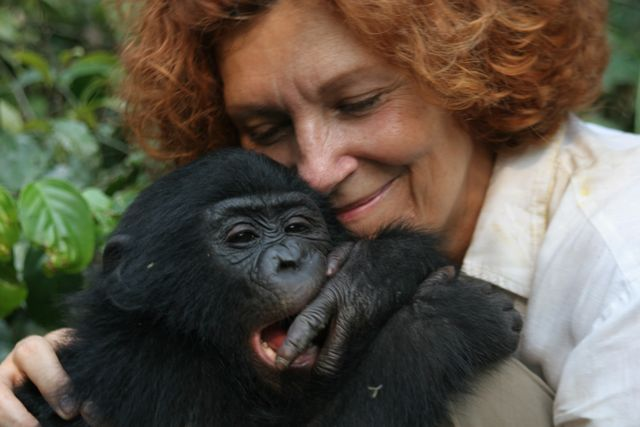 Best images about Anthropology   Southern Apes Australopithecus     Sol Sister Adventures Koko   The gorilla who talks to people