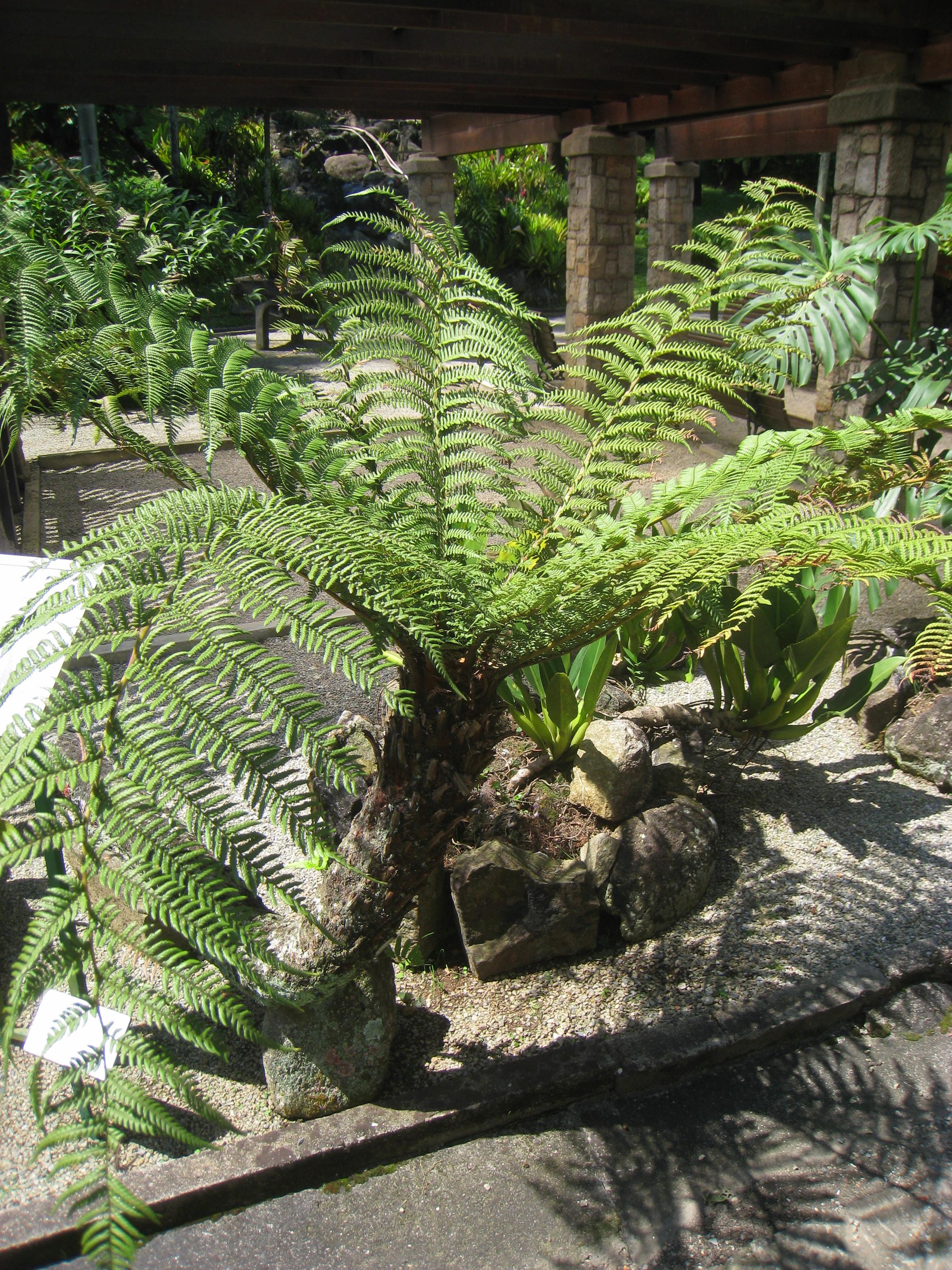 Dick in a plant creates futanaries 2